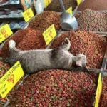 Toprak Altı ya da Yapay Kedi Kumları Zararlı mı? Silika Kedi Kumu Zararlı mı?